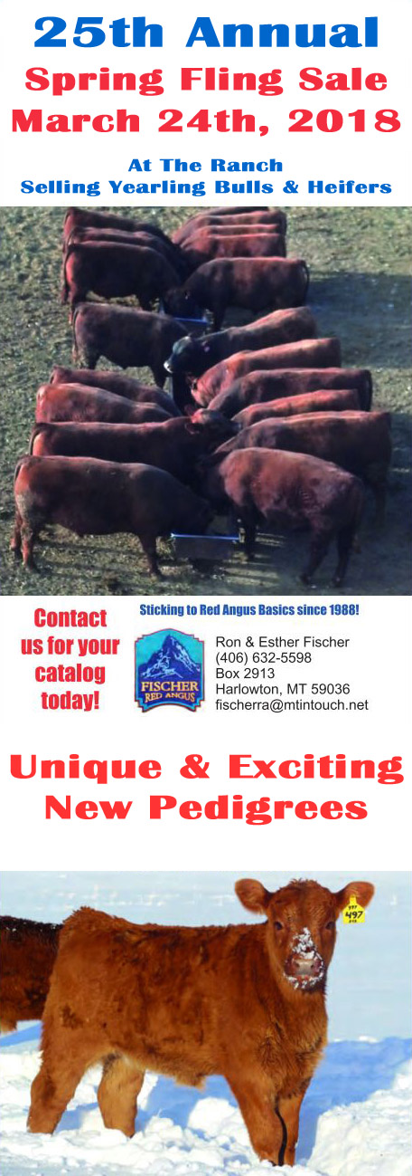 Fischer Red Angus Spring Fling Bull Sale